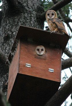 owls at home