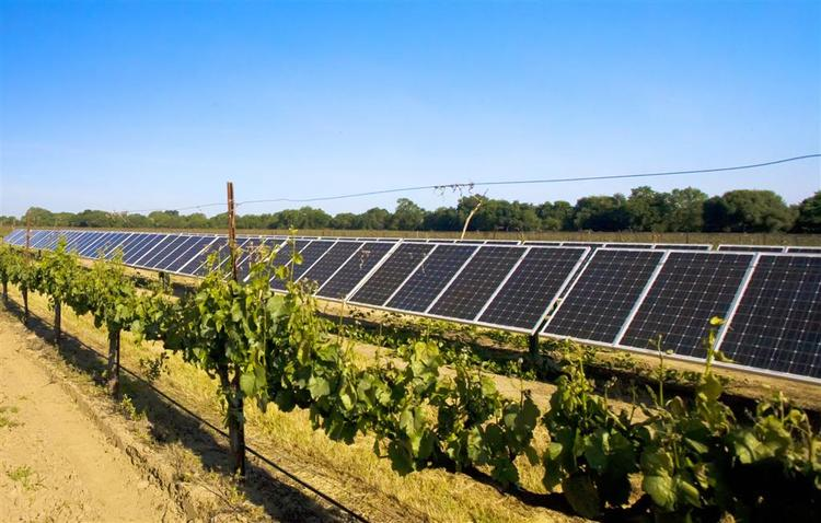 solar-panel-in-vineyard-large