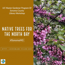 NativeTreesfortheNorthBay.png