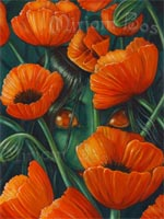 poppies.jpg - 27.45 kB