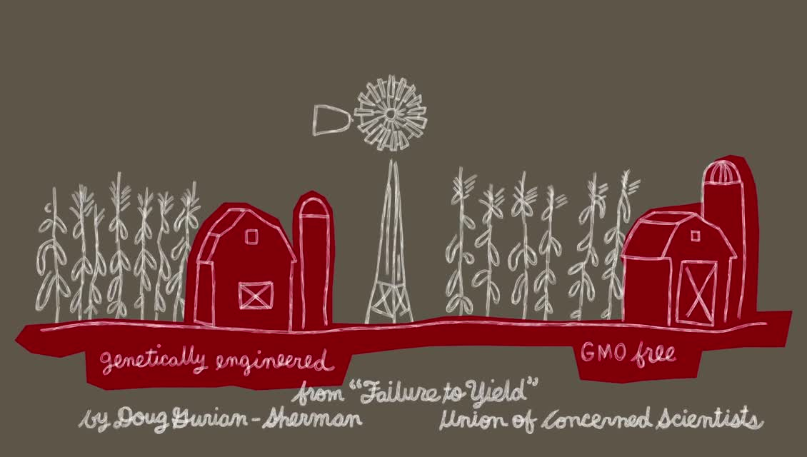 Lexicon of Sustainability - GMOs